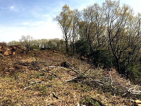 【1】立木の伐採
